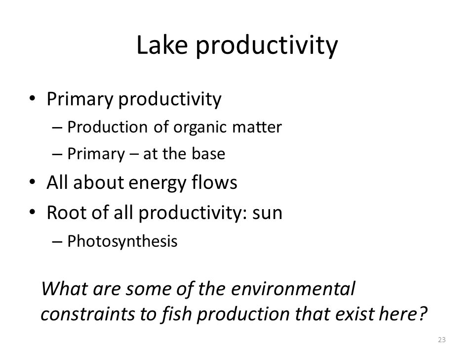 Lake productivity Primary productivity – Production of organic matter – Primary – at the base All about energy flows Root of all productivity: sun – P