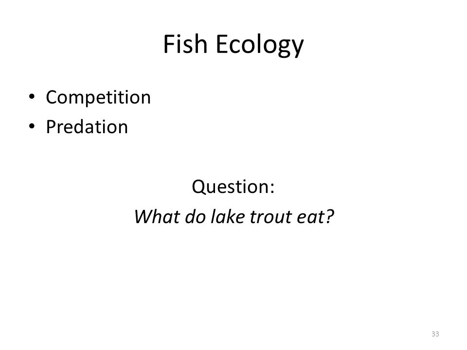 Fish Ecology Competition Predation Question: What do lake trout eat? 33