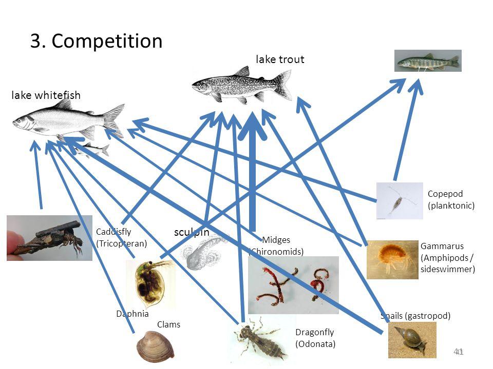 41 lake trout lake whitefish sculpin Gammarus (Amphipods / sideswimmer) 41 Snails (gastropod) Copepod (planktonic) Clams Midges (Chironomids) Caddisfl