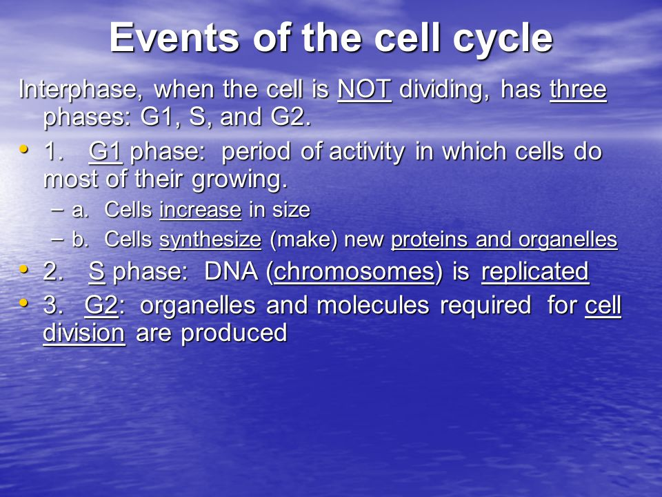 Events of the cell cycle Interphase, when the cell is NOT dividing, has three phases: G1, S, and G2. 1. G1 phase: period of activity in which cells do