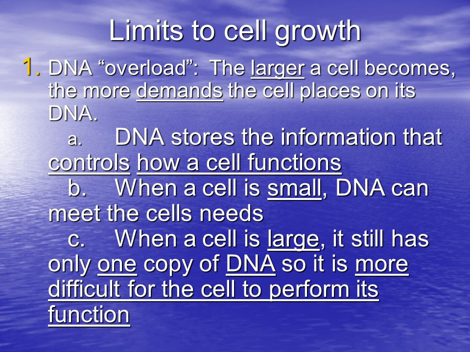 """Limits to cell growth 1. DNA """"overload"""": The larger a cell becomes, the more demands the cell places on its DNA. a. DNA stores the information that co"""