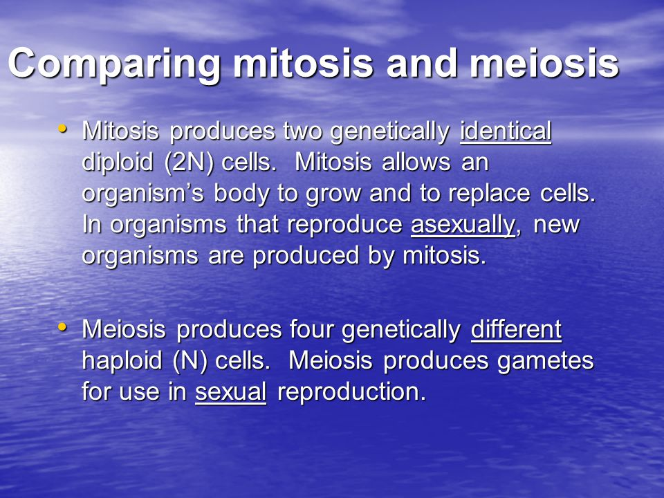 Comparing mitosis and meiosis Mitosis produces two genetically identical diploid (2N) cells. Mitosis allows an organism's body to grow and to replace