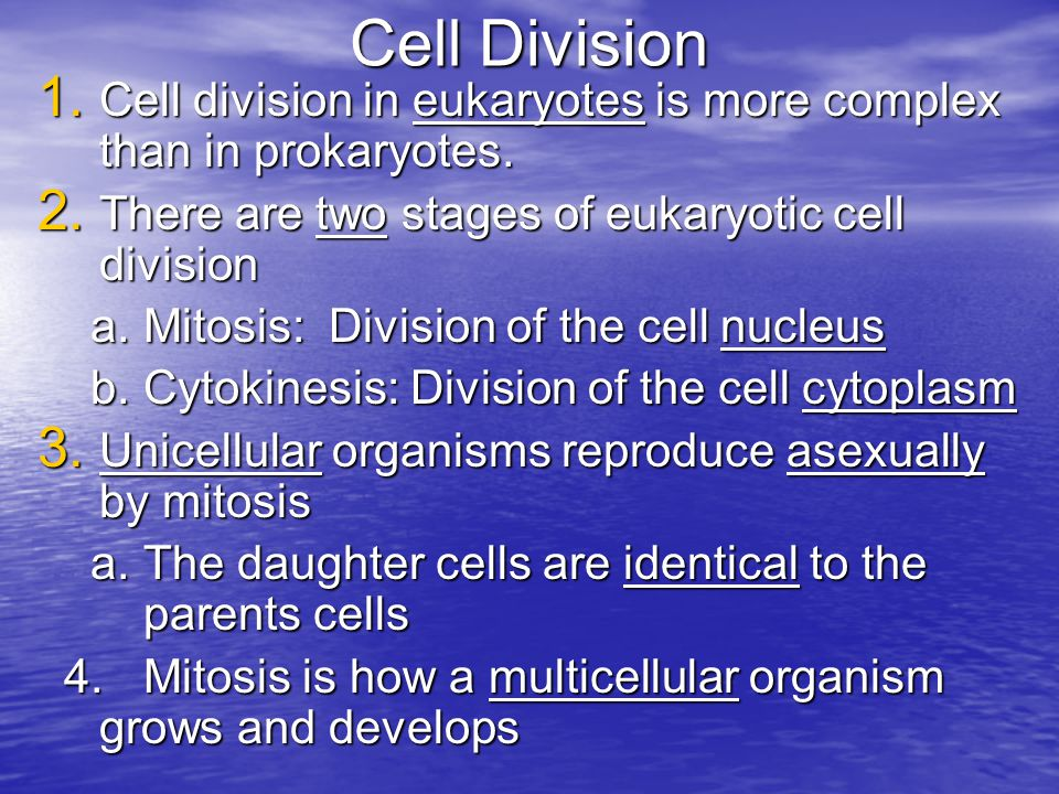 – d.Telophase I i.Nuclear membranes form around chromosomes i.