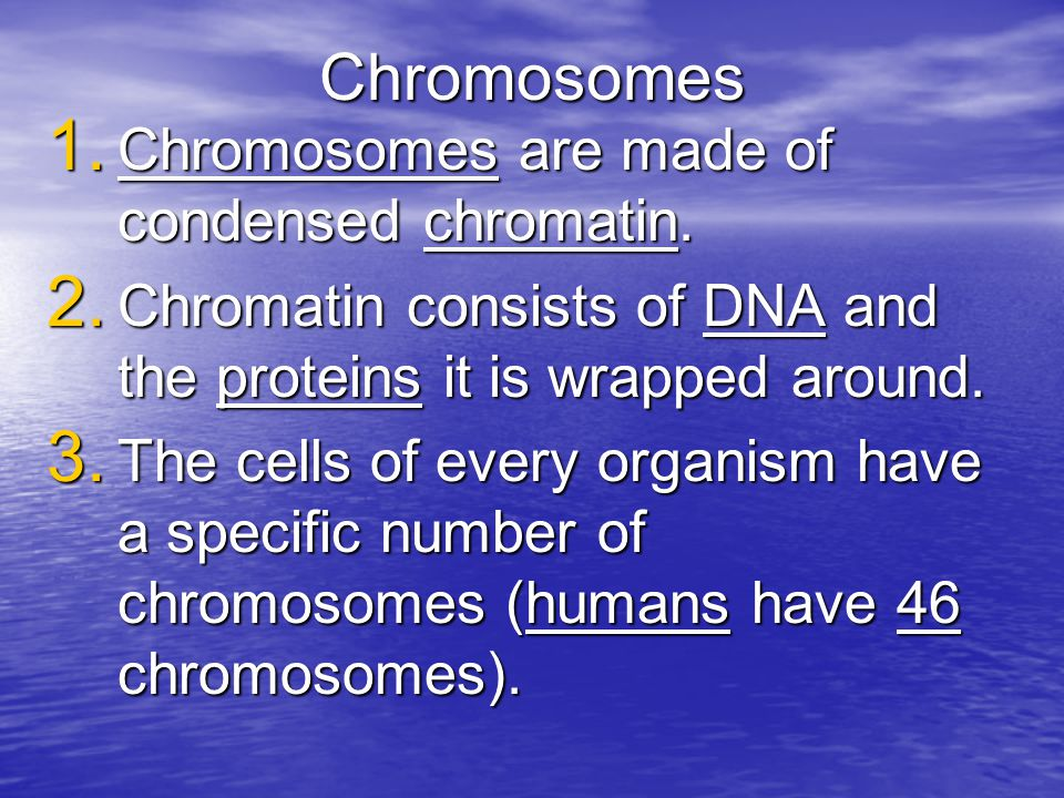 3.Chromosomes are only visible during cell division, when they are condensed.