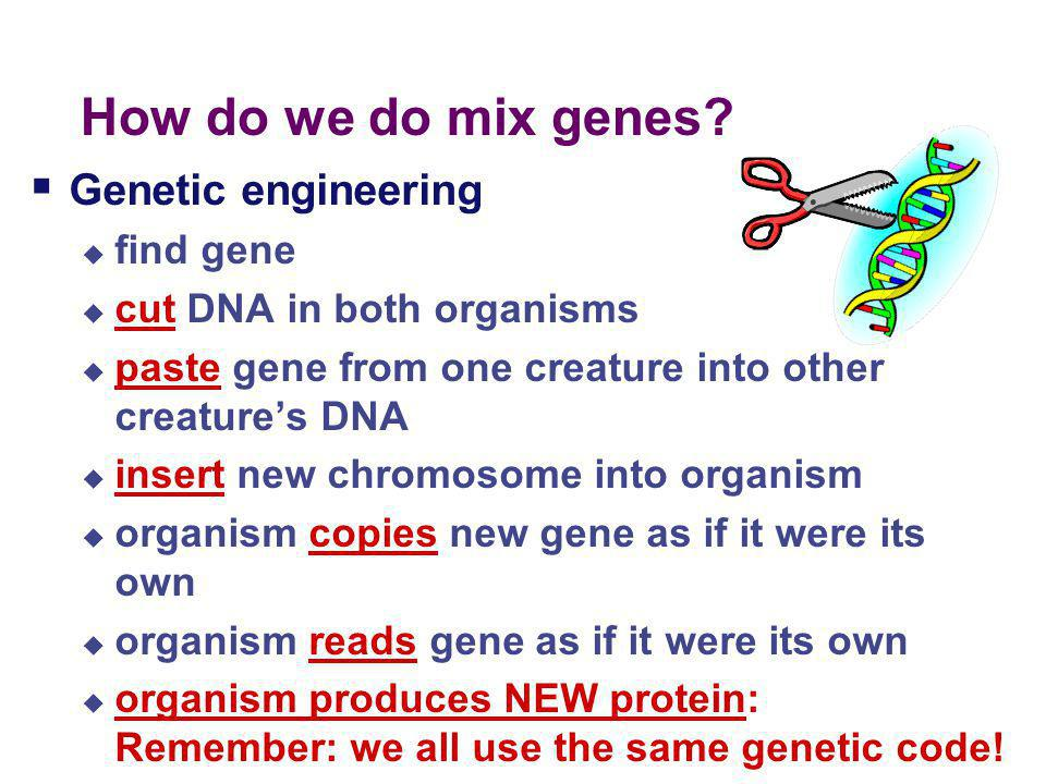 Mixing genes for medicine…  Allowing organisms to produce new proteins  bacteria producing human insulin  bacteria producing human growth hormone