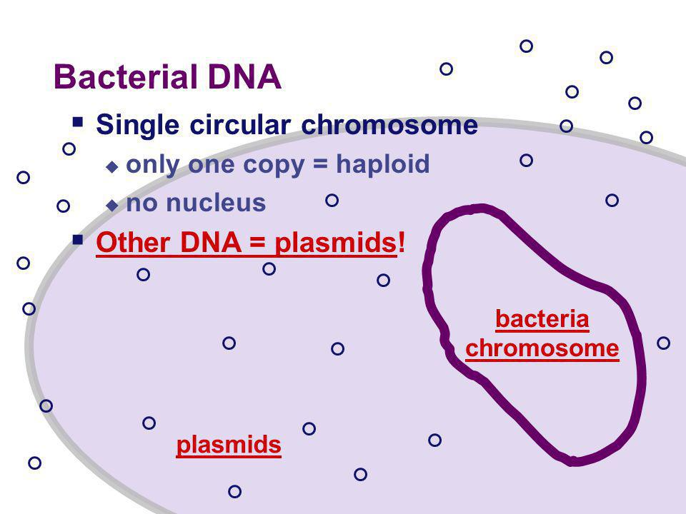 Bacteria  Bacteria are great.
