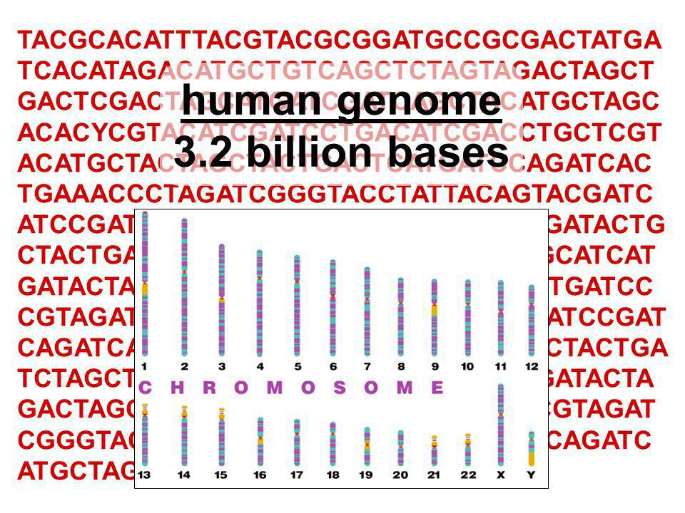 The code is universal  Since all living organisms…  use the same DNA  use the same code book  read their genes the same way