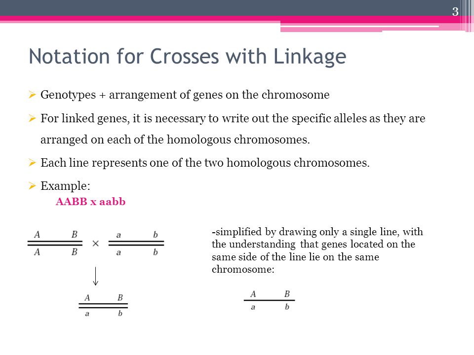 Notation for Crosses with Linkage  Genotypes + arrangement of genes on the chromosome  For linked genes, it is necessary to write out the specific alleles as they are arranged on each of the homologous chromosomes.
