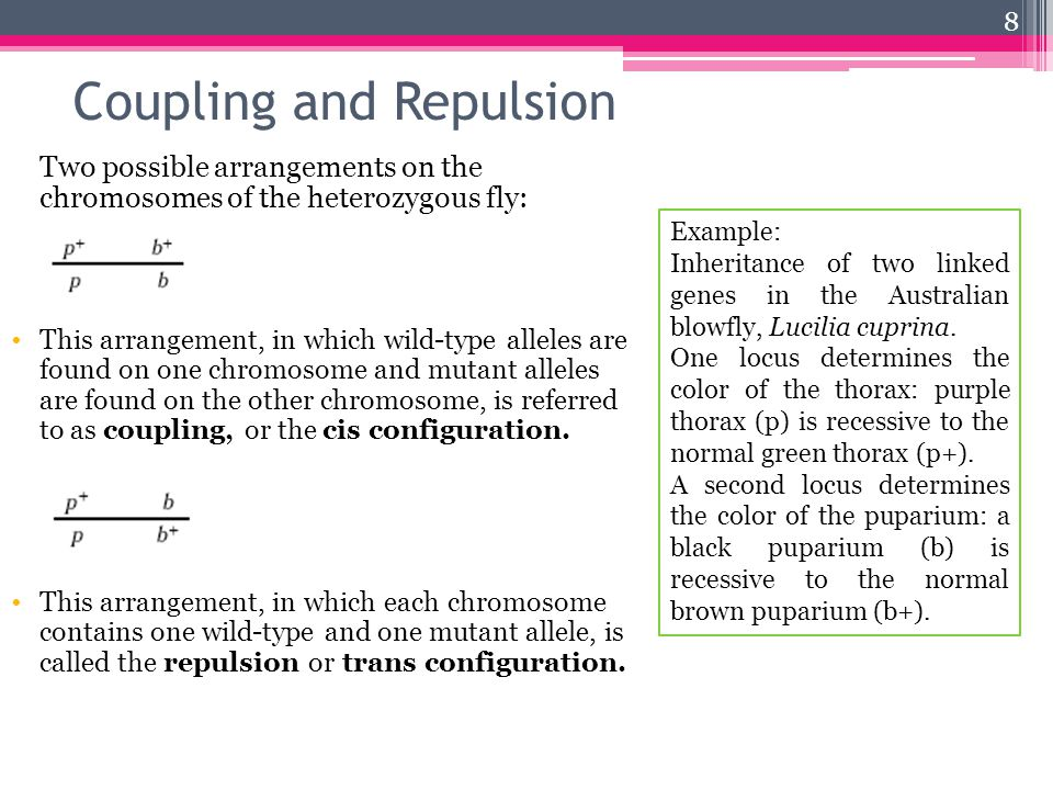 Coupling and Repulsion Two possible arrangements on the chromosomes of the heterozygous fly: This arrangement, in which wild-type alleles are found on one chromosome and mutant alleles are found on the other chromosome, is referred to as coupling, or the cis configuration.