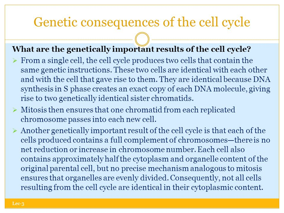 Genetic consequences of the cell cycle Lec-3 What are the genetically important results of the cell cycle.