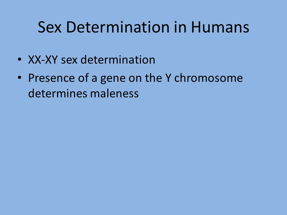 Sex Determination in Humans XX-XY sex determination Presence of a gene on the Y chromosome determines maleness