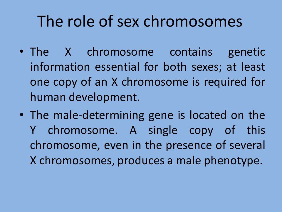 The role of sex chromosomes The X chromosome contains genetic information essential for both sexes; at least one copy of an X chromosome is required f