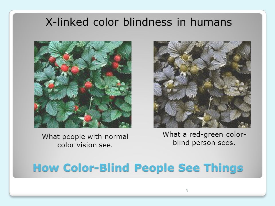 3 How Color-Blind People See Things What people with normal color vision see. What a red-green color- blind person sees. X-linked color blindness in h