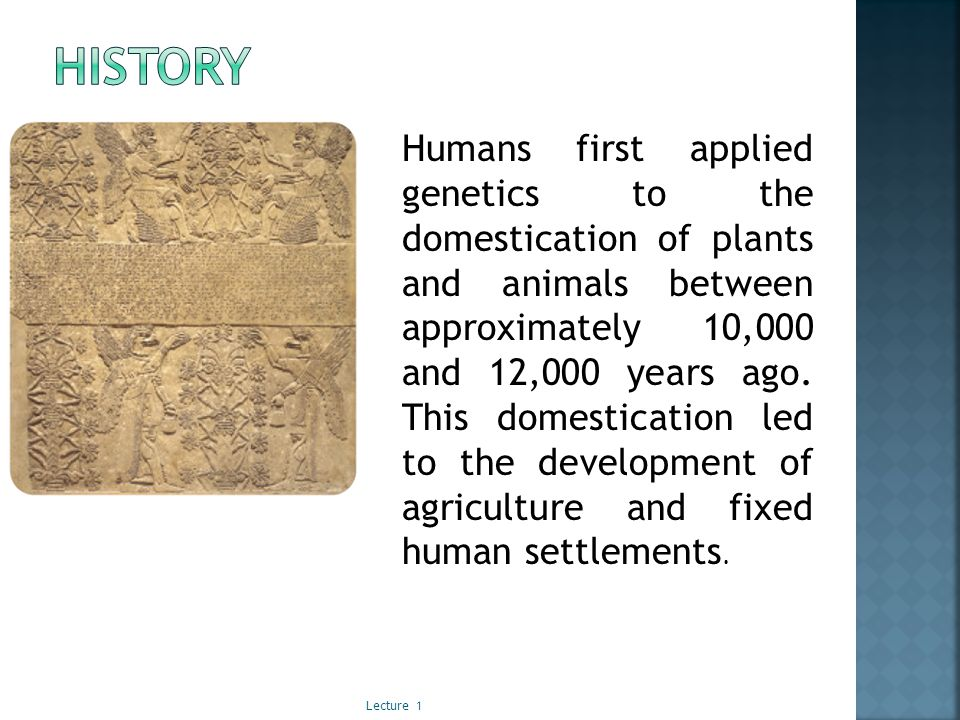 Humans first applied genetics to the domestication of plants and animals between approximately 10,000 and 12,000 years ago.