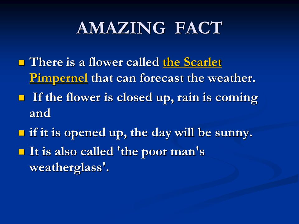 AMAZING FACT There is a flower called the Scarlet Pimpernel that can forecast the weather.