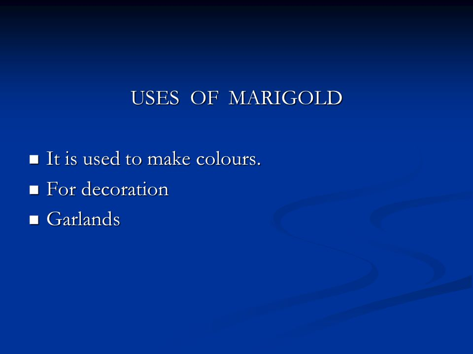 USES OF MARIGOLD It is used to make colours. It is used to make colours.