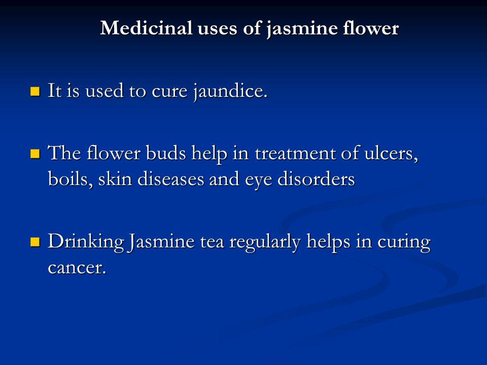 Medicinal uses of jasmine flower Medicinal uses of jasmine flower It is used to cure jaundice. It is used to cure jaundice. The flower buds help in tr
