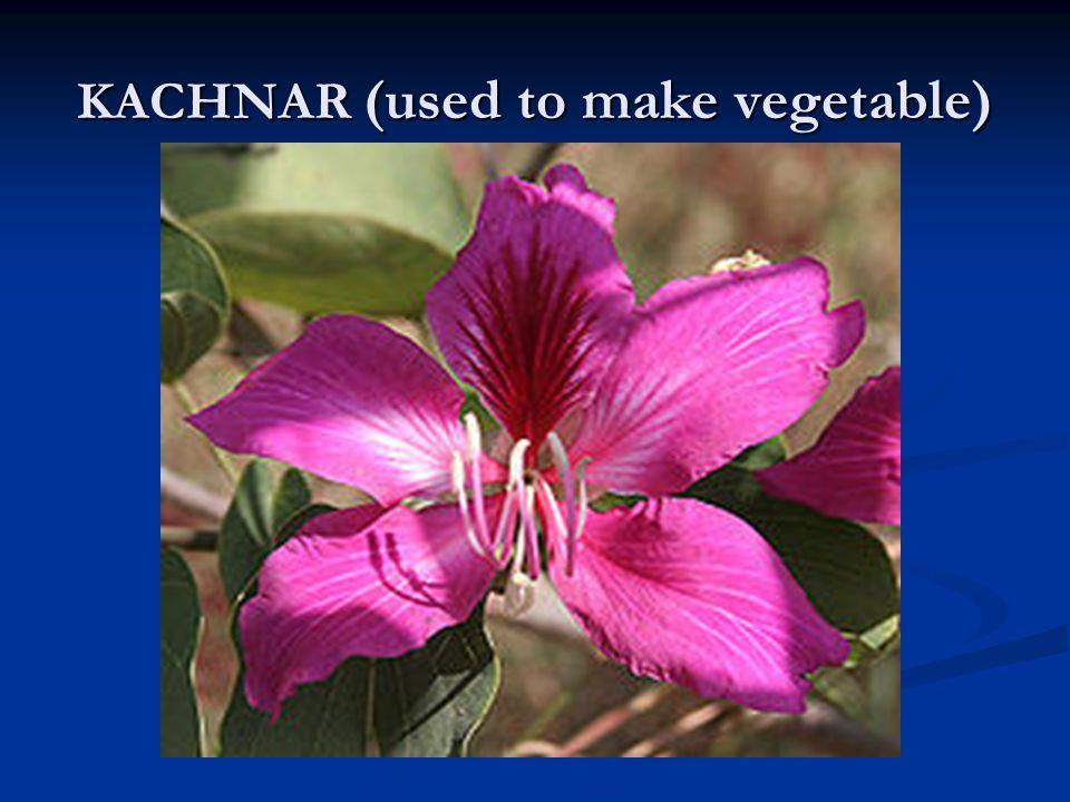 KACHNAR (used to make vegetable)