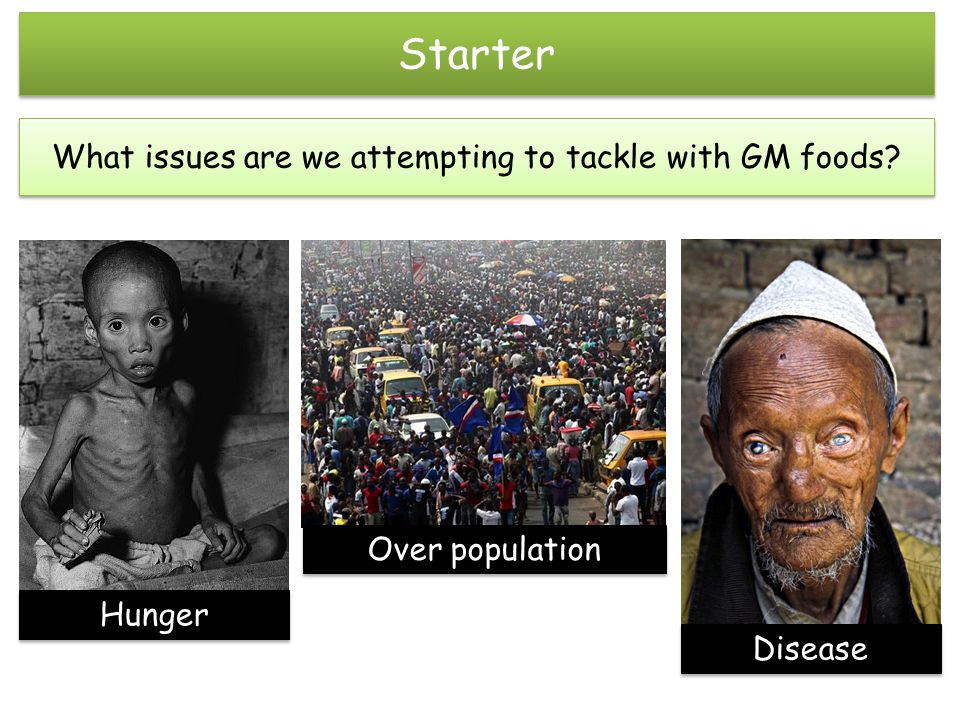 Starter What issues are we attempting to tackle with GM foods Hunger Disease Over population