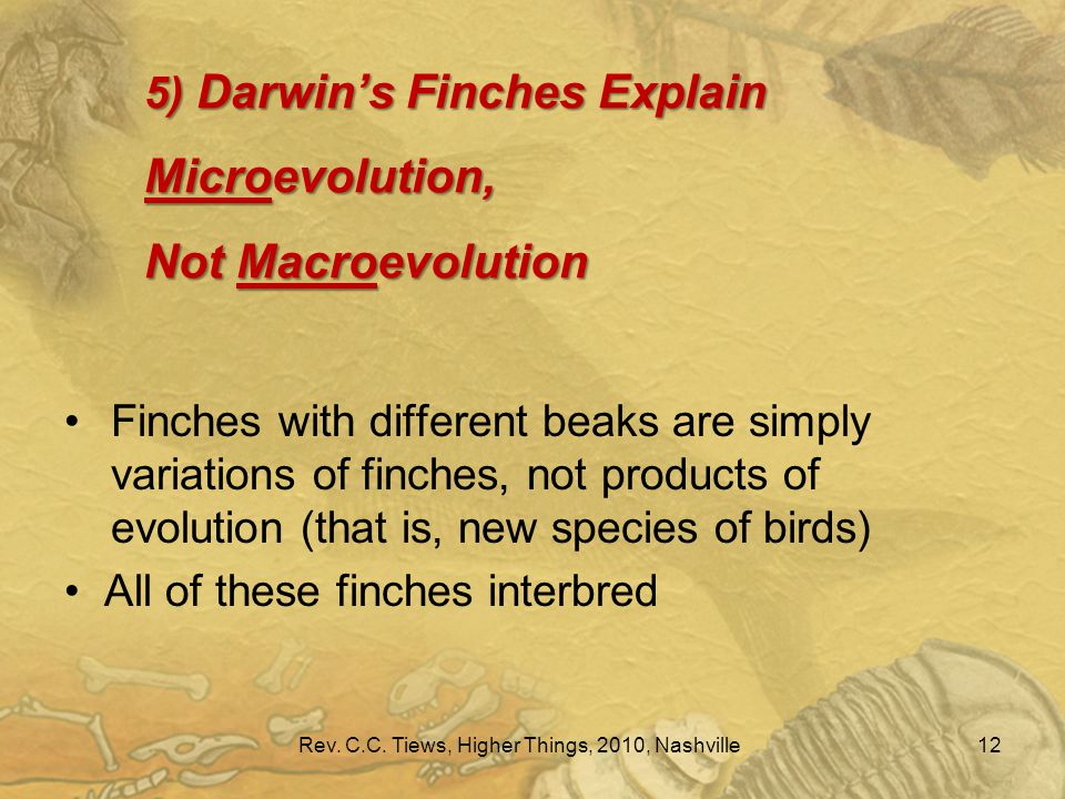 5) Darwin's Finches Explain Microevolution, Not Macroevolution 12 Finches with different beaks are simply variations of finches, not products of evolution (that is, new species of birds) All of these finches interbred Rev.
