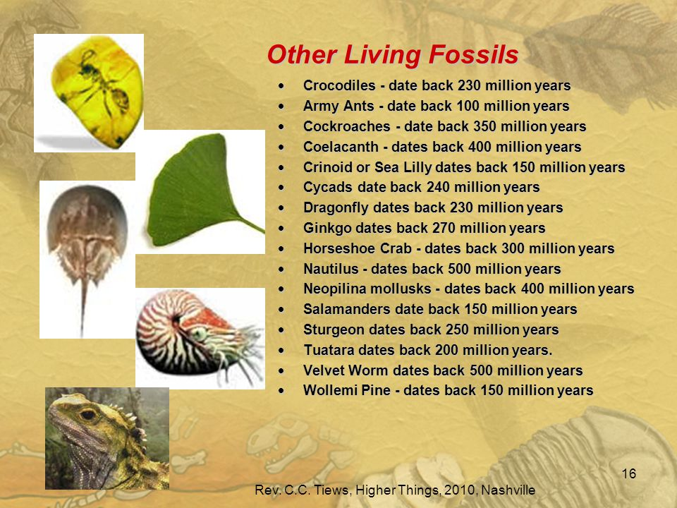 Other Living Fossils  Crocodiles - date back 230 million years  Army Ants - date back 100 million years  Cockroaches - date back 350 million years  Coelacanth - dates back 400 million years  Crinoid or Sea Lilly dates back 150 million years  Cycads date back 240 million years  Dragonfly dates back 230 million years  Ginkgo dates back 270 million years  Horseshoe Crab - dates back 300 million years  Nautilus - dates back 500 million years  Neopilina mollusks - dates back 400 million years  Salamanders date back 150 million years  Sturgeon dates back 250 million years  Tuatara dates back 200 million years.