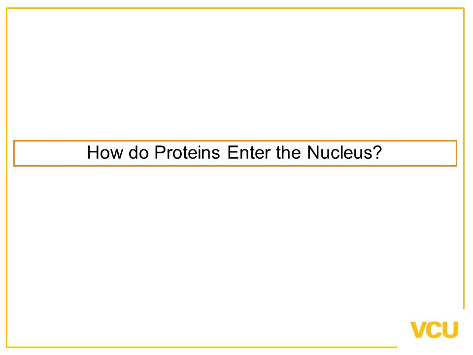 How do Proteins Enter the Nucleus?