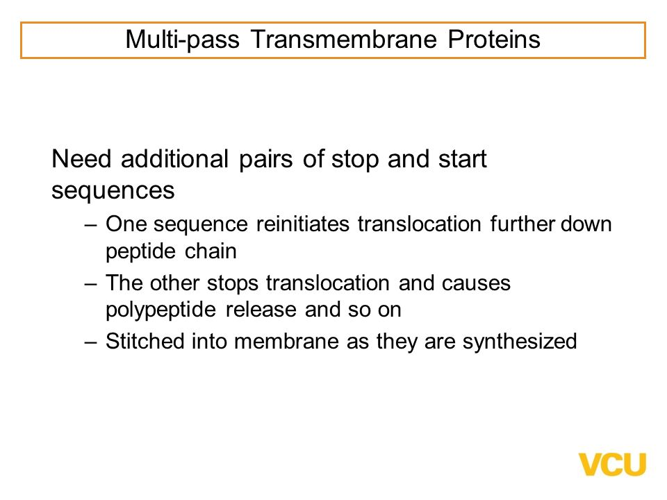 Need additional pairs of stop and start sequences –One sequence reinitiates translocation further down peptide chain –The other stops translocation and causes polypeptide release and so on –Stitched into membrane as they are synthesized Multi-pass Transmembrane Proteins