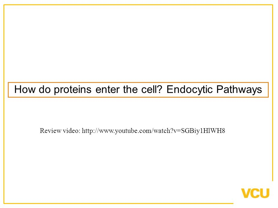 How do proteins enter the cell.