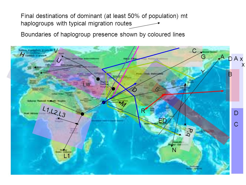L1 L1,L2,L3 H U N B M D DCDC A B A C G ED Y V P,q D R i,w x x Final destinations of dominant (at least 50% of population) mt haplogroups with typical migration routes Boundaries of haplogroup presence shown by coloured lines