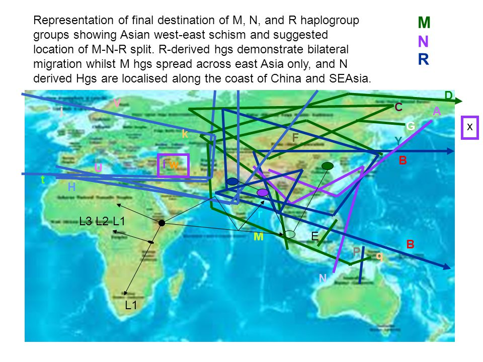 L1 N B A G E Y V k B D C H U L3 L2 L1 P M q F t r j x N R M i w Representation of final destination of M, N, and R haplogroup groups showing Asian wes