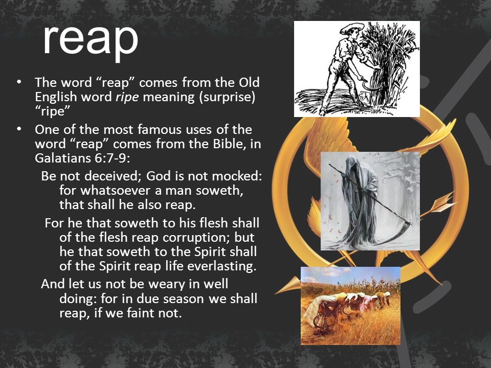 reap The word reap comes from the Old English word ripe meaning (surprise) ripe One of the most famous uses of the word reap comes from the Bible, in Galatians 6:7-9: Be not deceived; God is not mocked: for whatsoever a man soweth, that shall he also reap.