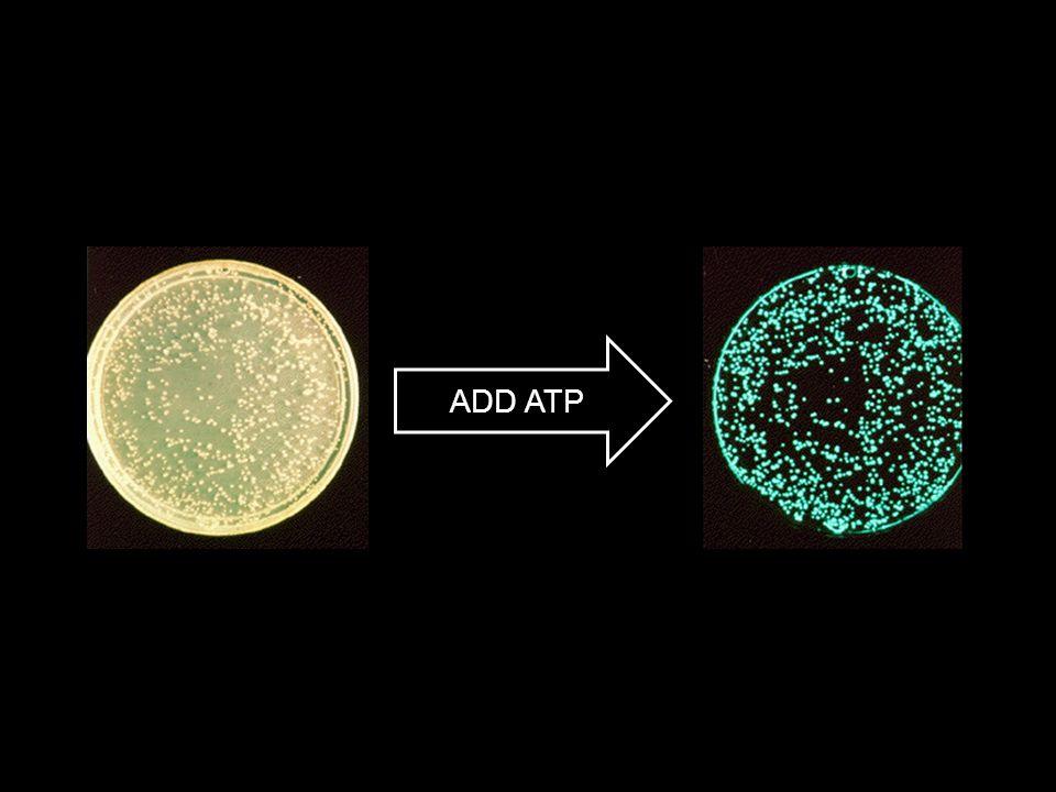ADD ATP