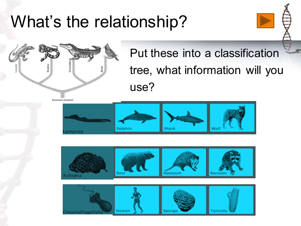 What's the relationship? Put these into a classification tree, what information will you use?