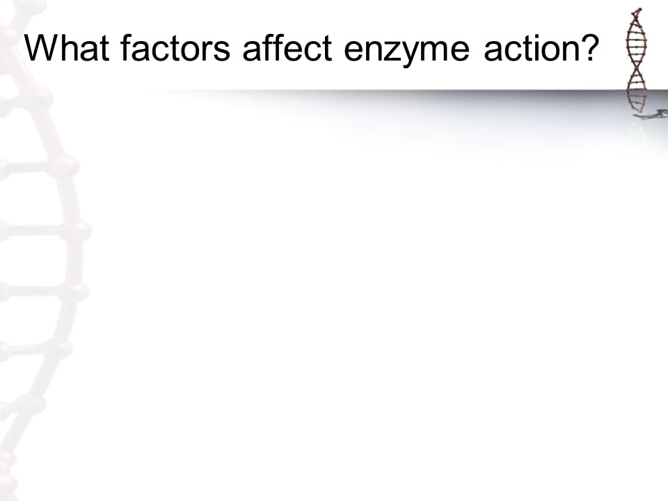 What factors affect enzyme action?