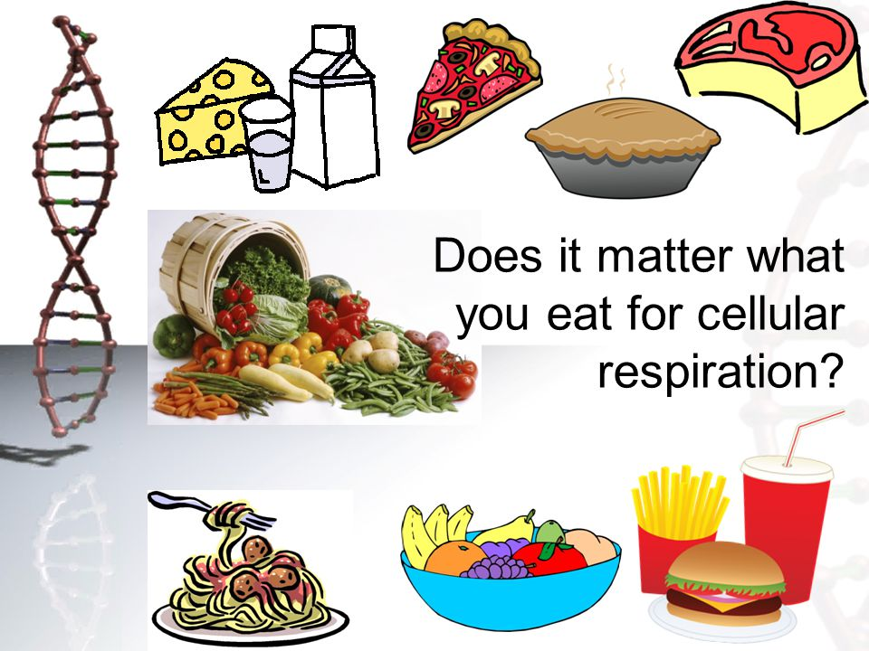 Does it matter what you eat for cellular respiration?