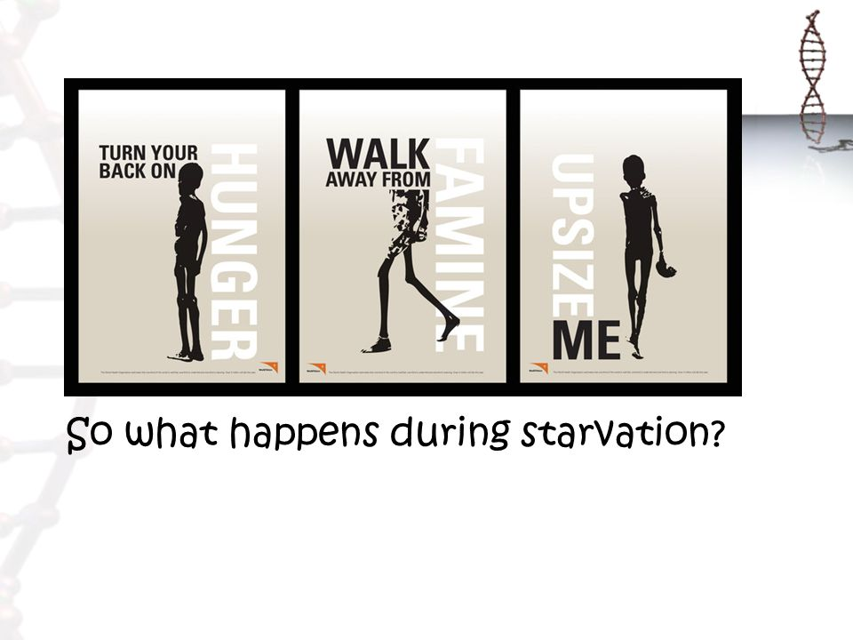 So what happens during starvation?