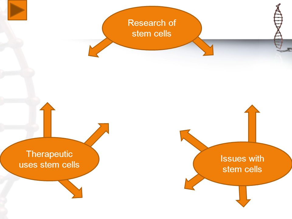 Issues with stem cells Therapeutic uses stem cells Research of stem cells