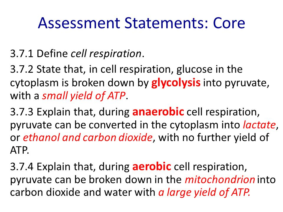 Aerobic respiration Takes place in the mitochondria of eukaryotic cells Substrate: pyruvate Produces LOTS of ATP (28 – 38 ATP): 90% of total ATP from respiration Also produces carbon dioxide, water and heat Oxygen is the final electron acceptor