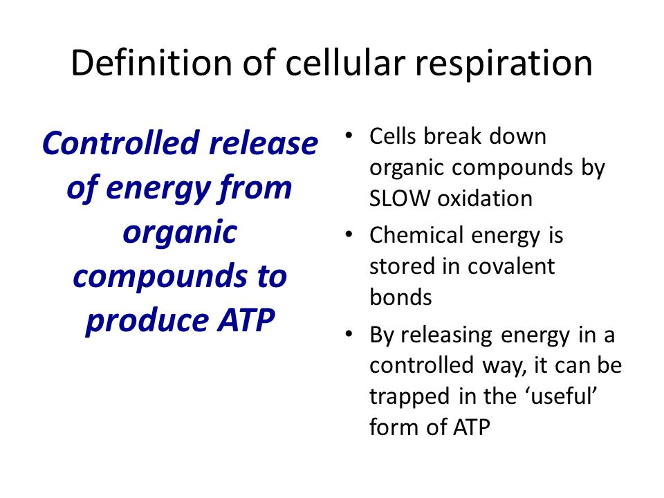 Stages of aerobic respiration 1.The 'link' reaction 2.The Krebs cycle 3.The electron transport chain 4.Chemiosmosis and oxidative phosphorylation