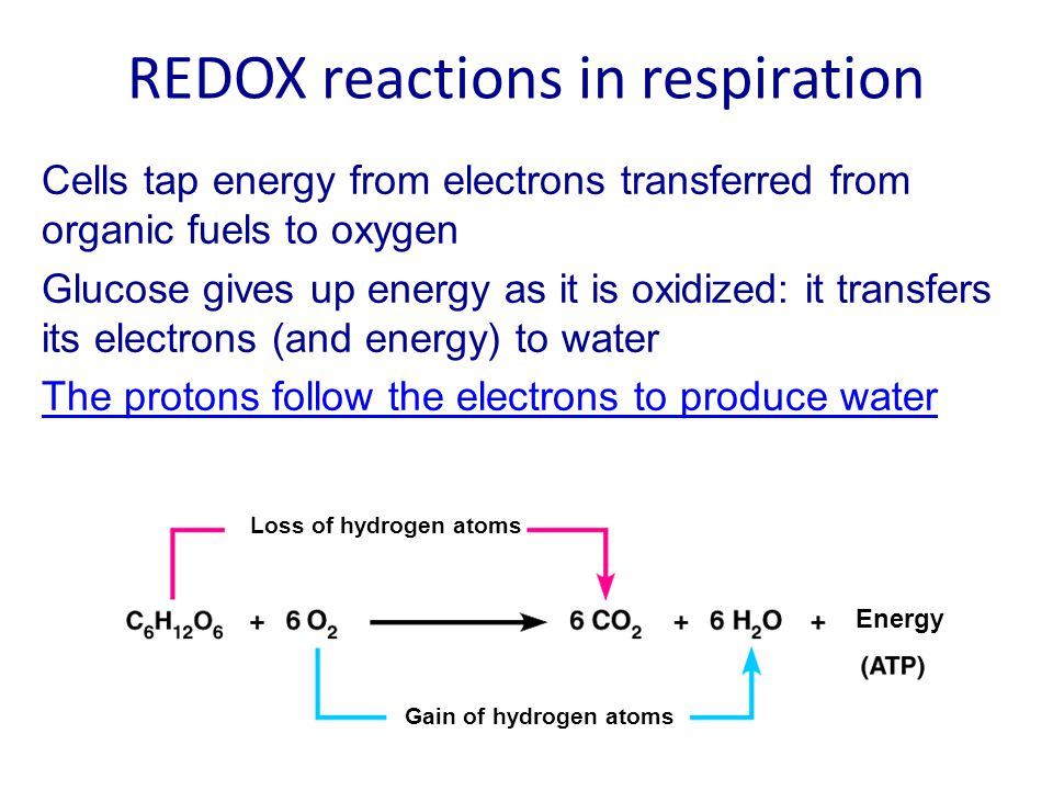 The Link Reaction Steps 2 in aerobic respiration (step 1 is glycolysis in the cytoplasm) After glycolysis, when there is ample oxygen… 2 pyruvate molecules from glycolysis move into the matrix of the mitochondrion for the Link reaction and the Krebs cycle