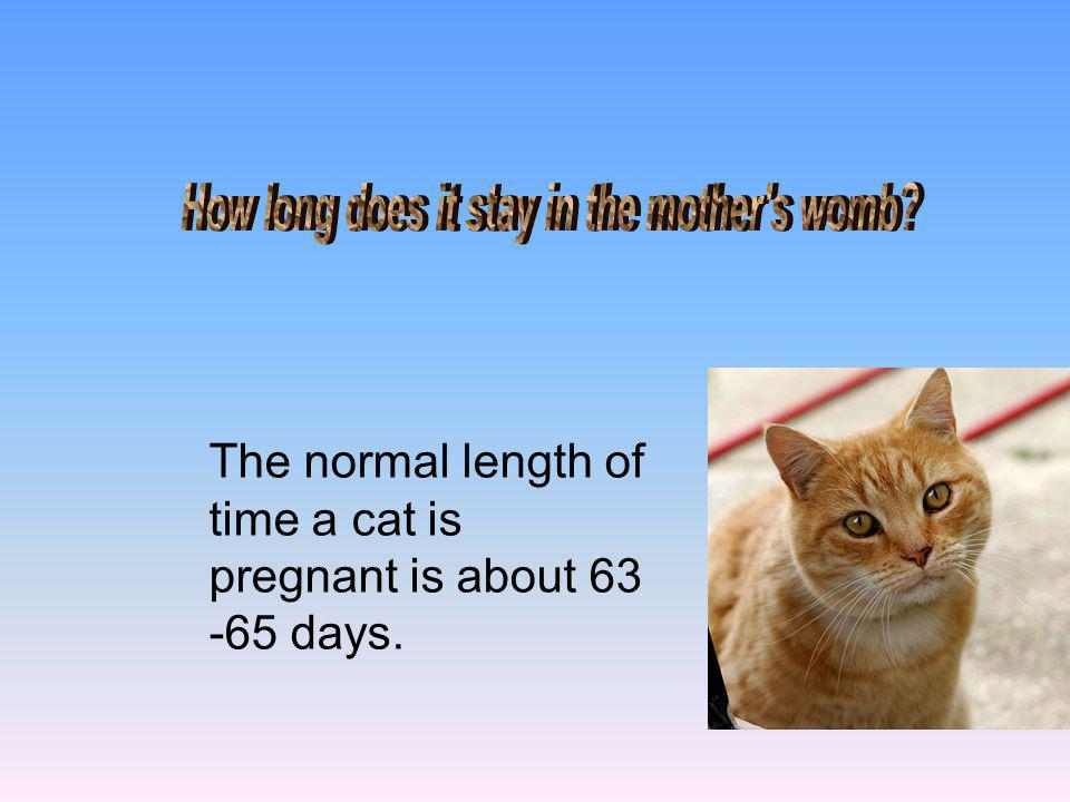The normal length of time a cat is pregnant is about 63 -65 days.