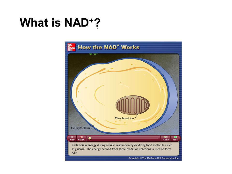 What is NAD + ?