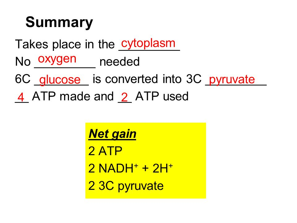 Summary Takes place in the _________ No _________ needed 6C ________ is converted into 3C _________ __ ATP made and __ ATP used Net gain 2 ATP 2 NADH
