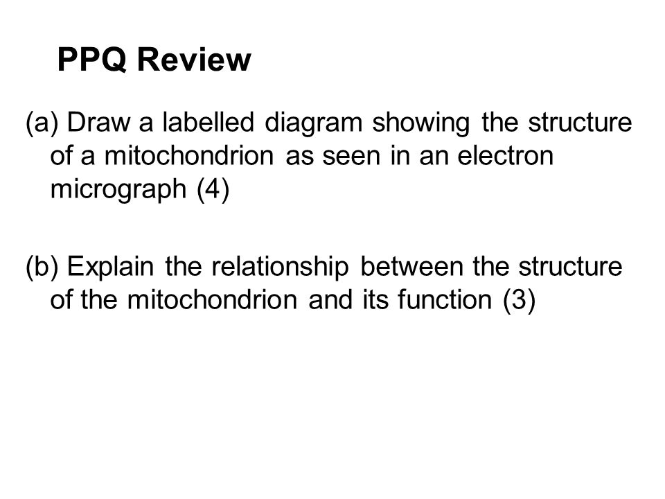 PPQ Review (a) Draw a labelled diagram showing the structure of a mitochondrion as seen in an electron micrograph (4) (b) Explain the relationship bet