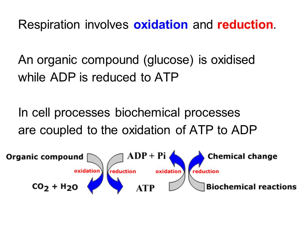 Respiration involves oxidation and reduction. An organic compound (glucose) is oxidised while ADP is reduced to ATP In cell processes biochemical proc