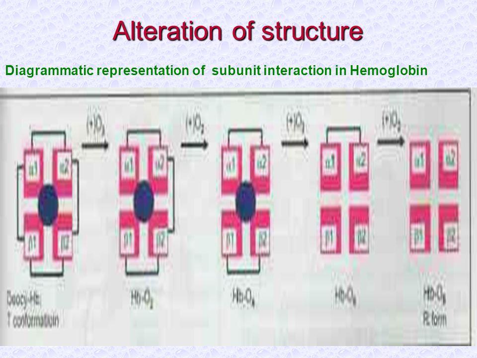 10/12/2014 Alteration of structure Diagrammatic representation of subunit interaction in Hemoglobin