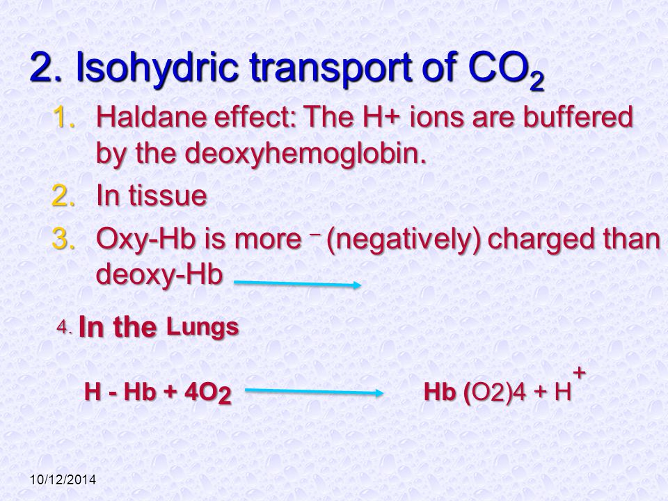 10/12/2014 2. Isohydric transport of CO 2 1.Haldane effect: The H+ ions are buffered by the deoxyhemoglobin. 2.In tissue 3.Oxy-Hb is more – (negativel