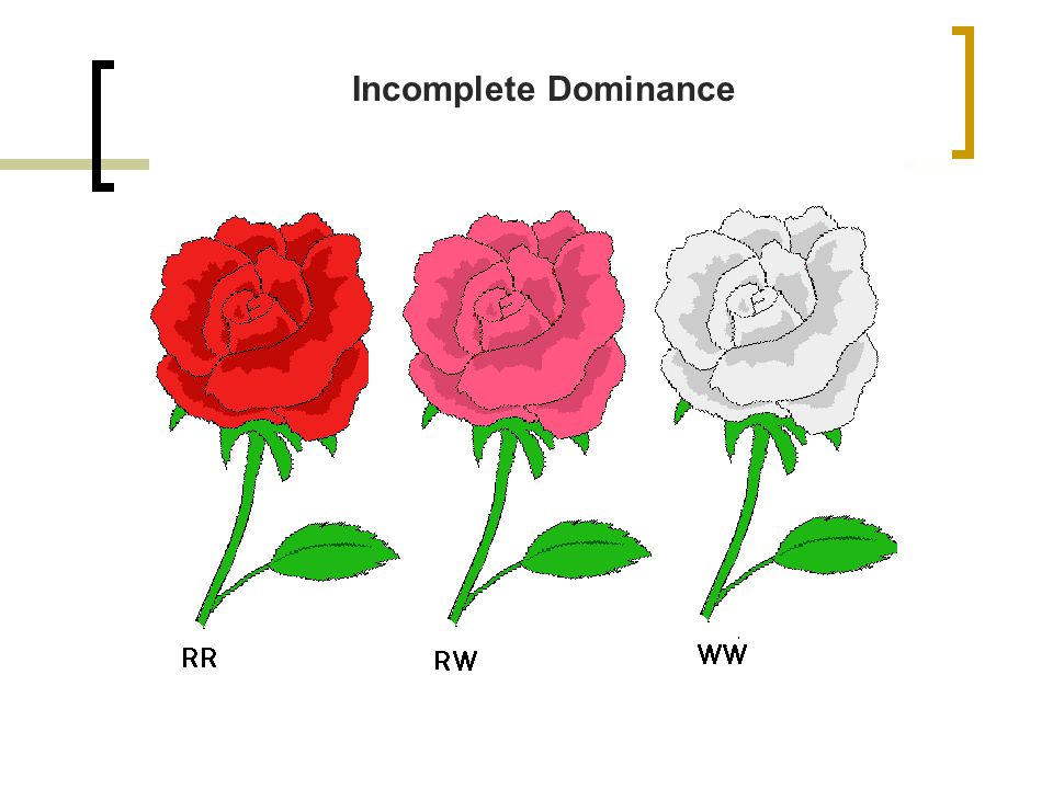 In codominance, neither allele are dominant; both are expressed.