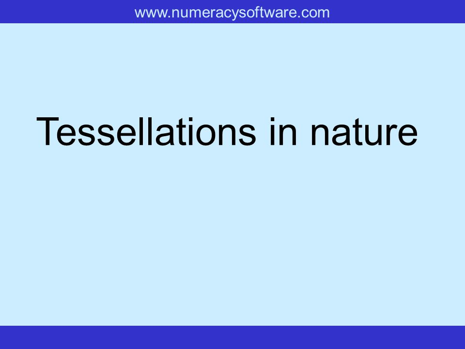 www.numeracysoftware.com Tessellations in nature