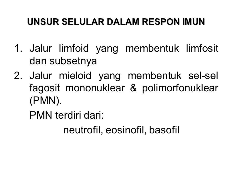 UNSUR SELULAR DALAM RESPON IMUN 1.Jalur limfoid yang membentuk limfosit dan subsetnya 2.Jalur mieloid yang membentuk sel-sel fagosit mononuklear & pol